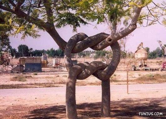 trees, unusual, 3