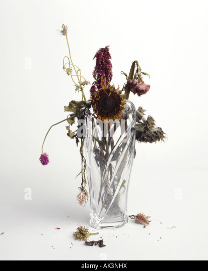 Vase Of Flowers Dying Related Keywords Suggestions Vase Of
