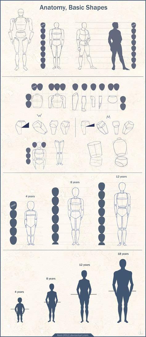 ideas  anatomi oranlaranatomy ratios