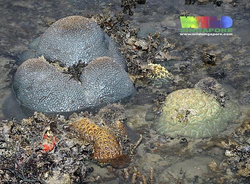 Living reefs of Terumbu Raya