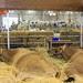 Dairy parlour