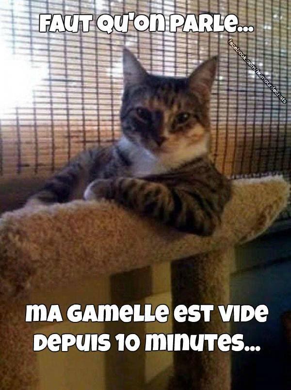 Chat Image Drole Avec Texte | Humourew