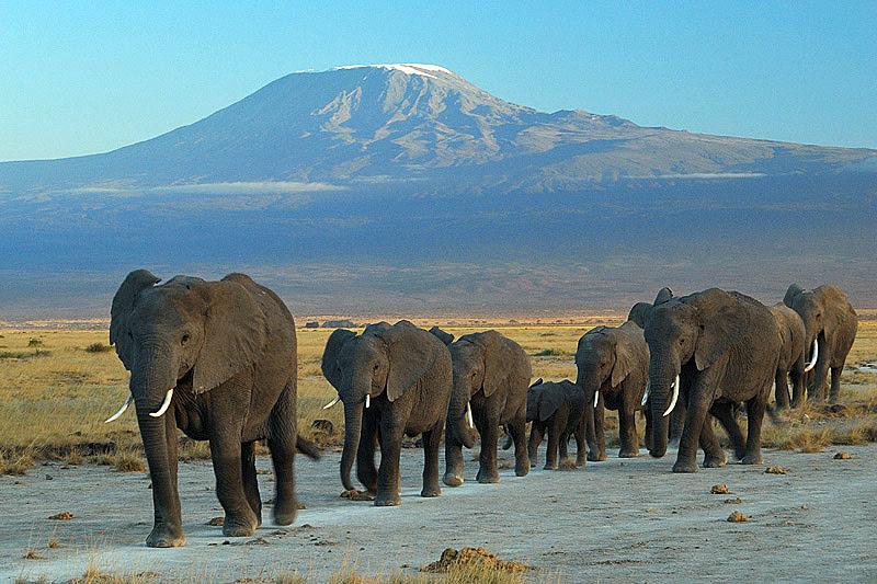 Mt. Kilimanjaro from Amboseli