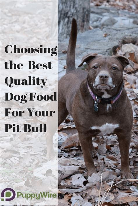 dog food  pitbulls definitive guide top  reviews