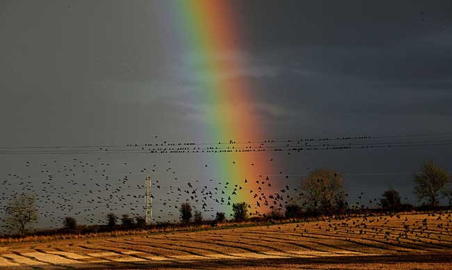 http://i.dailymail.co.uk/i/pix/2009/11_02/BirdRainbowPA_650x388.jpg