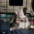 New York City Open Temporary Shelter for Pets Affected by Sandy