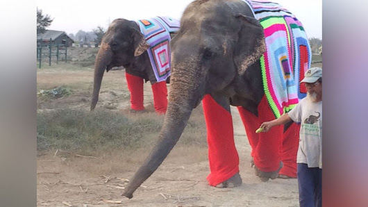 Indian Elephants Sport Colorful Knit Sweaters - ABC News
