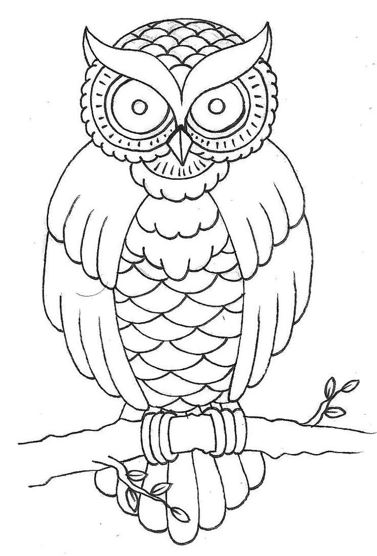 Free Owl Outline Download Free Clip Art Free Clip Art On Clipart