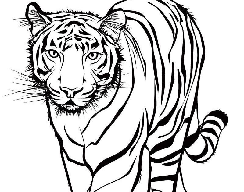 genial ausmalbilder tiger kostenlos  top kostenlos