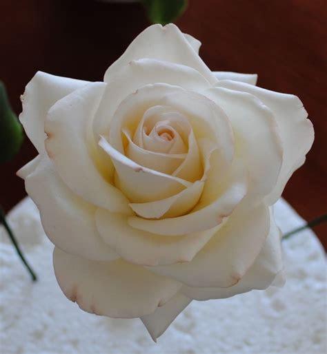 A single gumpaste rose   Tutorial's   Sugar paste