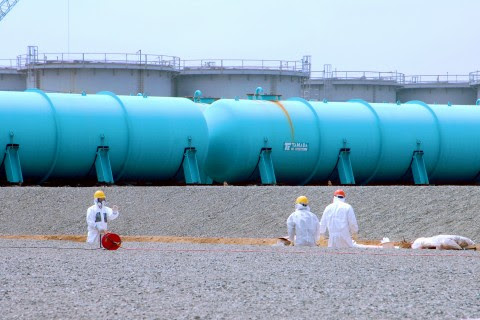 Fukushima disaster was preventable, new study finds