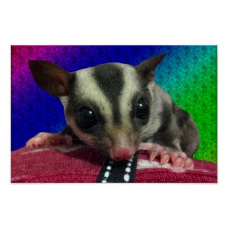 Young Sugar Glider Poster