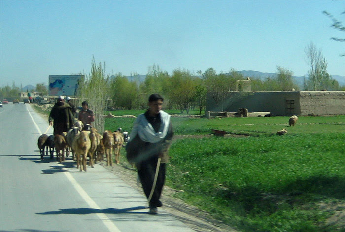 Logar Traffic