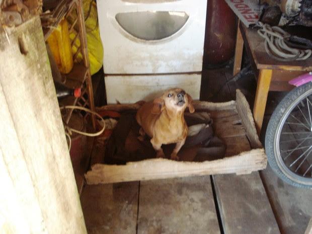 Cães e coelhos foram encontrados nesta segunda-feira, em Joinville (Foto: PMA/Divulgação)