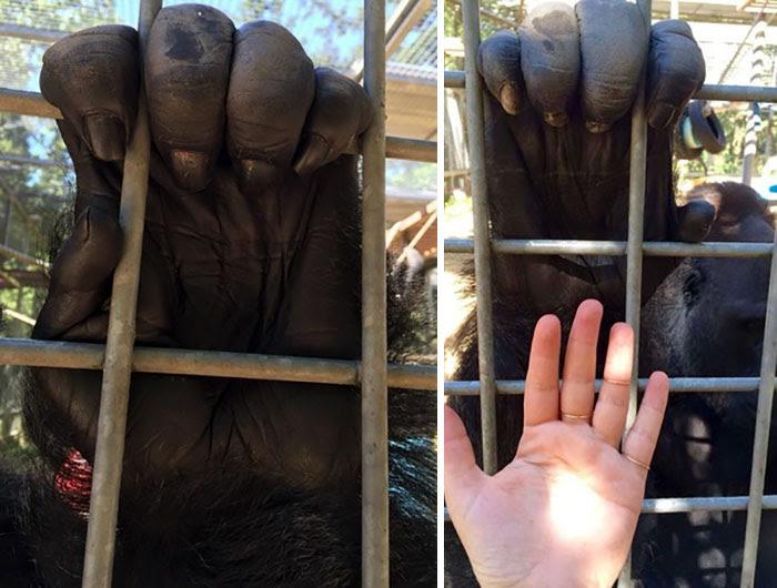 5 - Gorilla's Hand