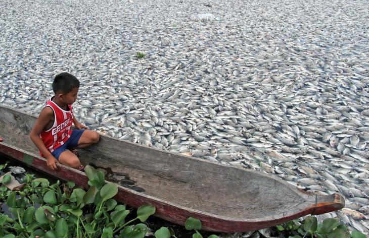 Fotografía de un niño sobre una lancha flotando entre peces muertos en Indonesia