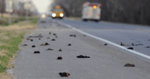 Dead Birds-Louisiana