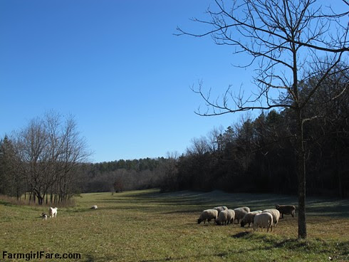 Slowly defrosting in the hayfield (4) - FarmgirlFare.com
