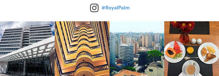 #RoyalPalm