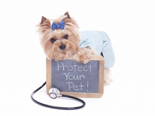 PET INSURANCE -Why it is a must have for your companion animals