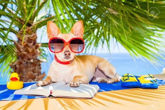 Summer fun: Safety tips for your pet - VetnCare