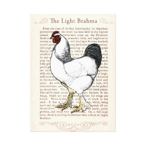 Elegant Rooster Country Style Living Kitchen Decor Stretched