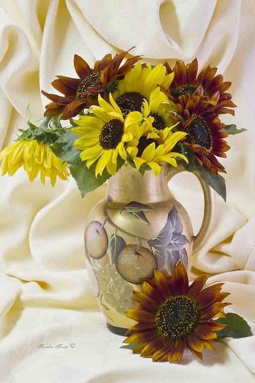 #sunflower  #orange #orangeflowers #orangesunflowers #sunflowers #rustyorangesunflowers #sunflowerart...