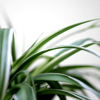 Can House Plants Reduce Energy Costs? | Home Guides | SF Gate