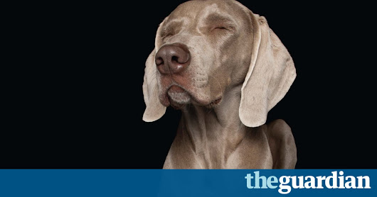 Zen Dogs: relaxed pooches captured in spontaneous canine bliss – in pictures | Life and style | The Guardian