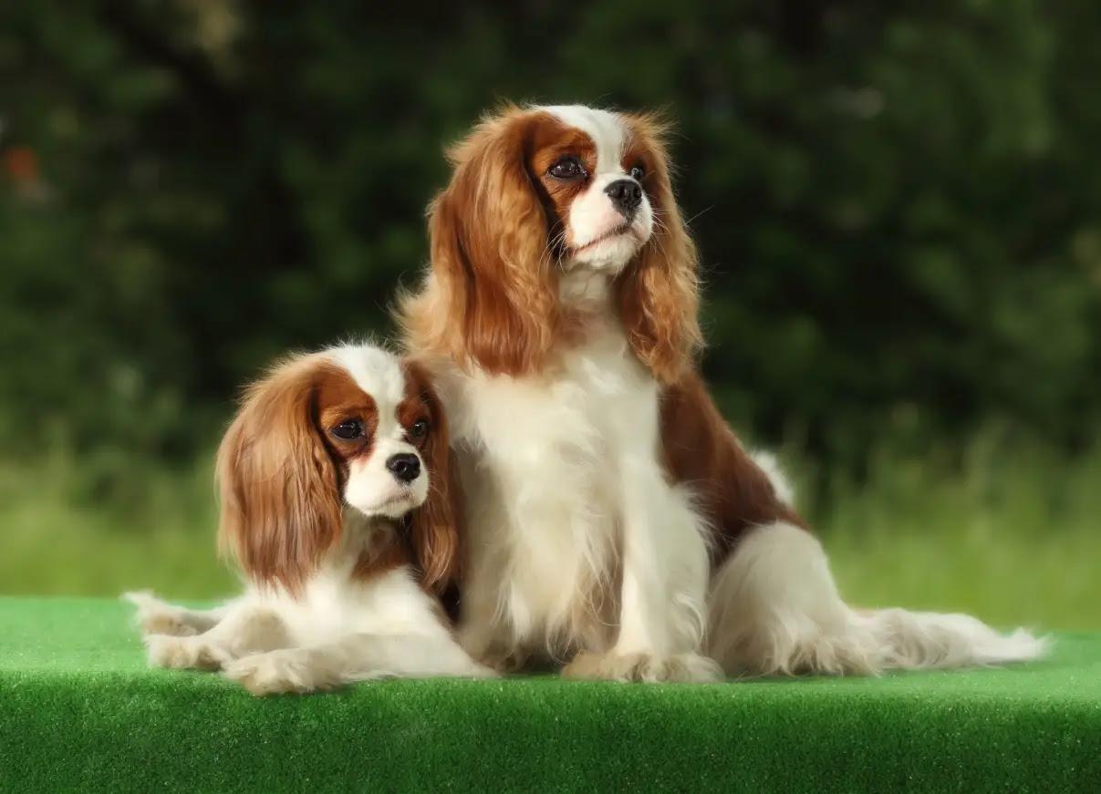 Small Dog Breeds  101DogBreeds