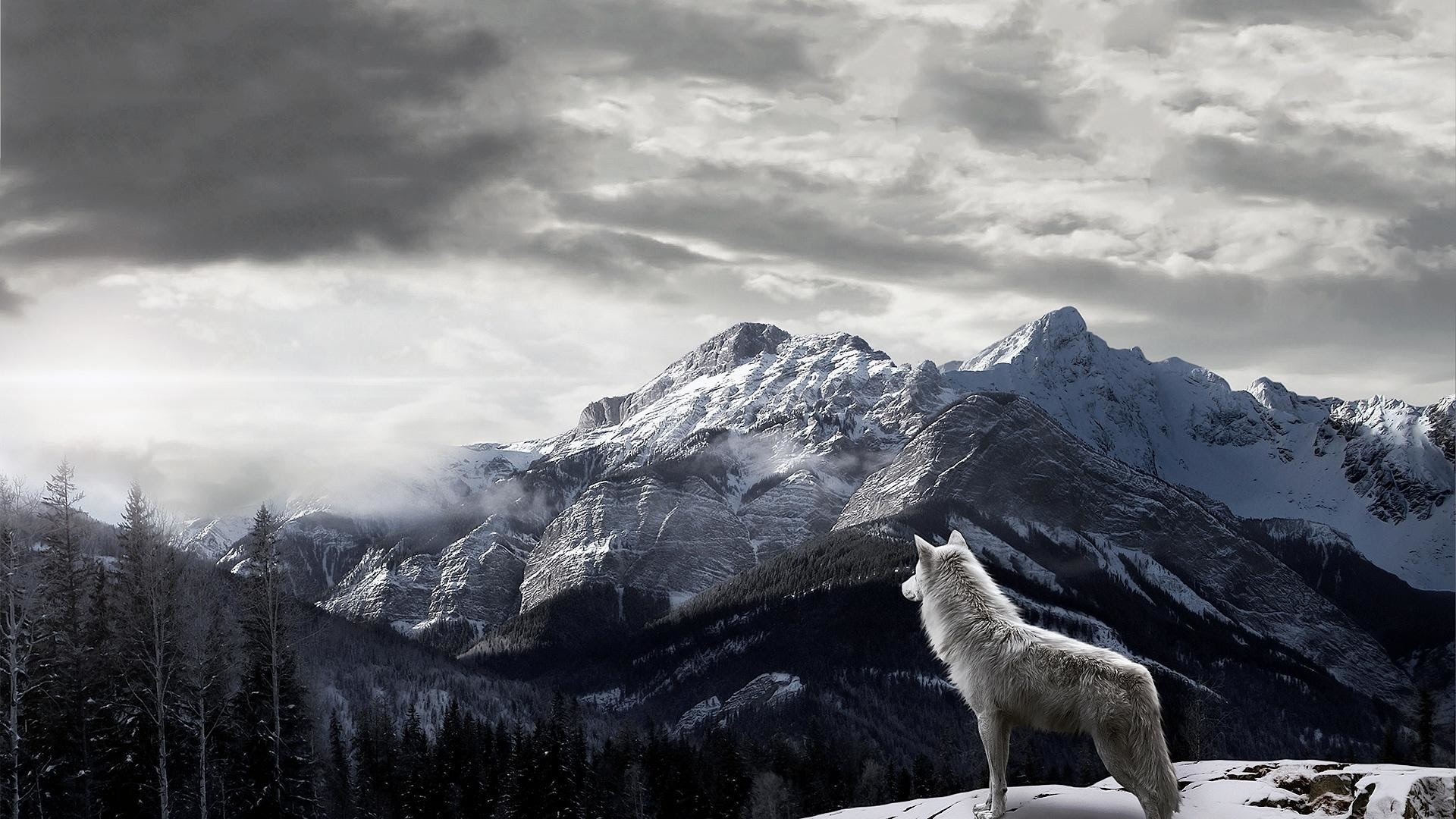 Lone Wolf Wallpaper 57 Images