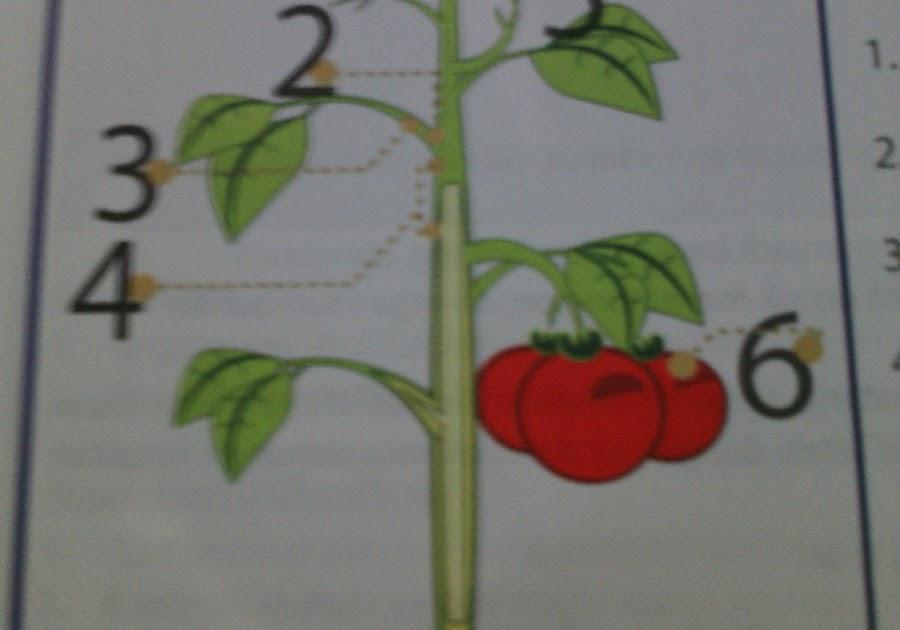 Struktur Dan Fungsi Jaringan Pada Tumbuhan Tinggi Brainly