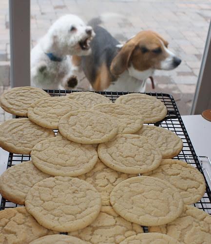 Danny cookies charlie barking