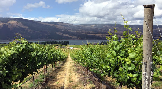 The Columbia Gorge Wine Trail Beckons You | LocavOregon