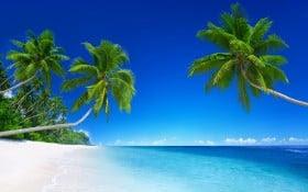 Tropical Beach Paradise 5K