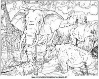 Animali Savana Da Colorare Stampae Colorare