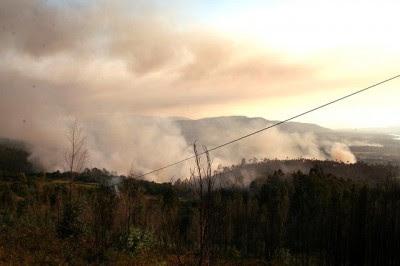 Bloco quer prevenir já os incêndios florestais e reativar o Grupo de Análise e Uso do Fogo dissolvido pelo Governo num ano que se prevê difícil.