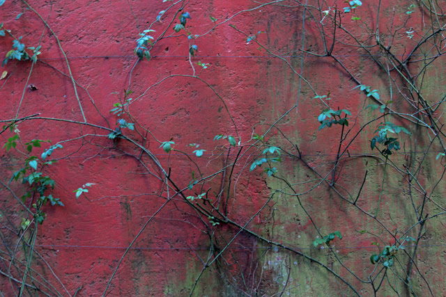 Moss on red