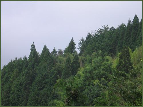 02 lost trees like lost teeth