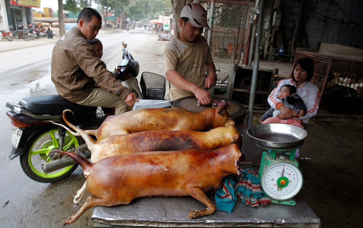Slaughtered dogs are prepared for sale in Duong Noi, a small village in Vietnam. Dog meat is a common dish in many Eastern Asian nations.