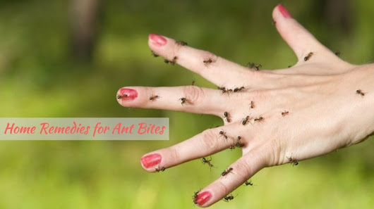 Home Remedies for Ant Bites