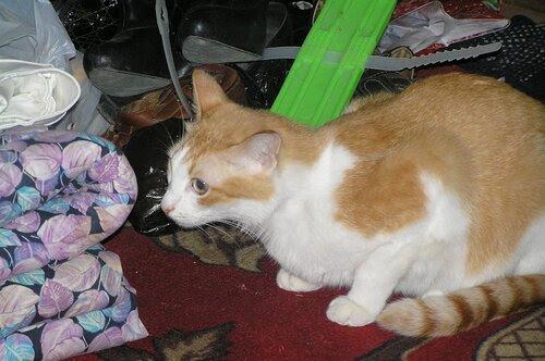 Кот и бардак