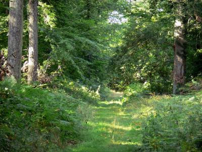 Fontainebleau forest - Tourism & Holiday Guide