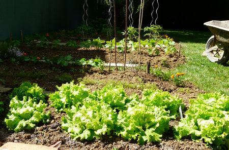 le_p_tit_jardin_3