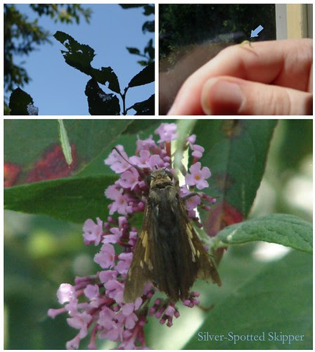 Leaf-Caterpillar-Butterfly