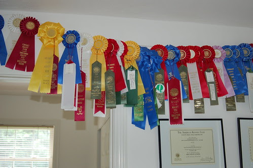 Agility trial ribbons