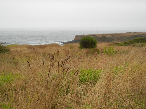 Mendocino, California _ 7651