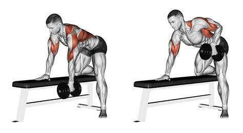 bent  dumbbell row kinx learning