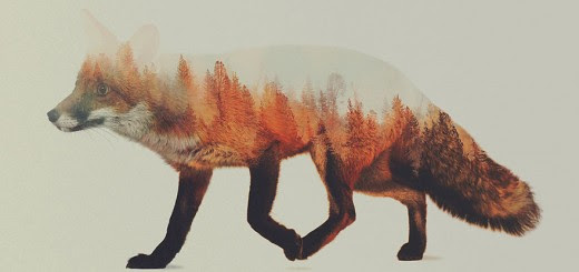 Norwegian artist blends spectacular animal portraits with their natural landscapes