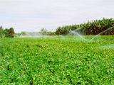 irrigação 4